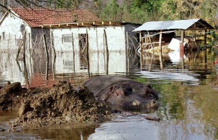 Hippo escapes from Montenegro zoo 06