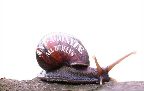 snail gaffiti 06
