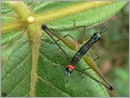 twoheadedgrasshopper 01