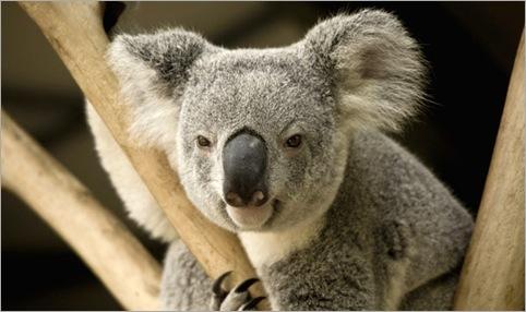 Michael Jackson's Koala Bear