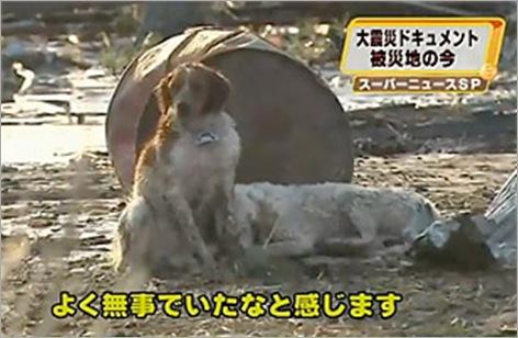 dog_japan_tsunami 01