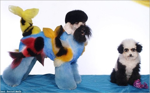 Here's a fishy tail! Dogs sculpted into works of art for extreme grooming contests