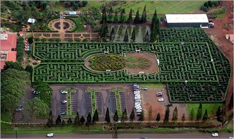 Pineapple Garden Maze, Wahiawa, Hawaii