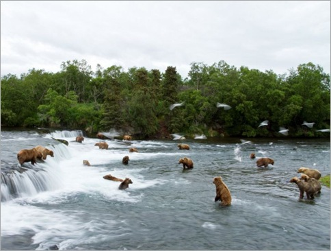 bears-fishing1