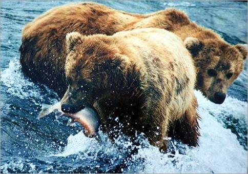 Bear1.preview