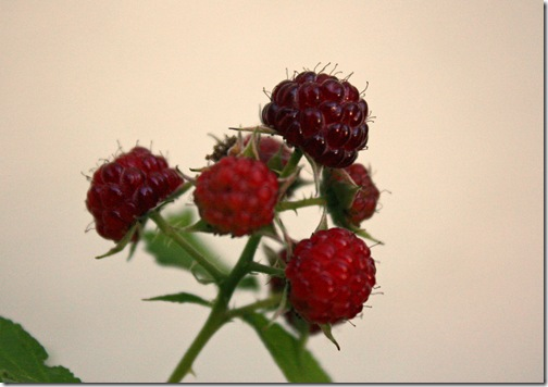 Warm raspberries