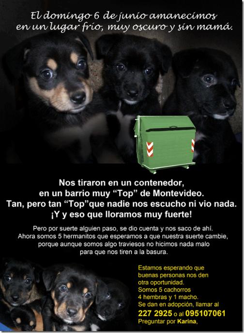 afiche-perritos