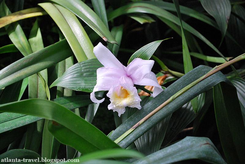 Orchids in Atlanta botanical garden