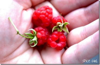 Wild Raspberries2