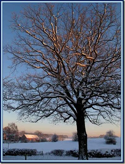 Treescape in Little Bollington