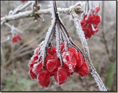 0108berries
