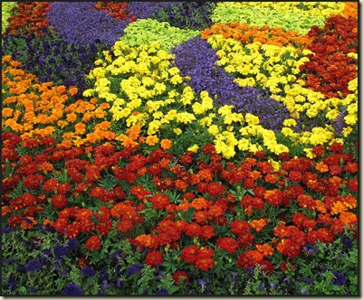 2203flowers