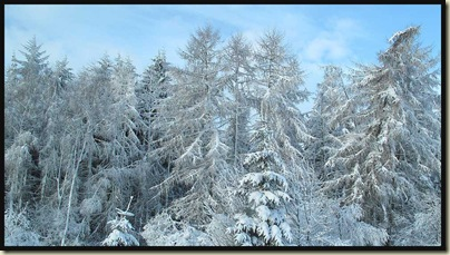 Monday morning - on the road again - snow laden trees viewed from the car