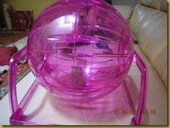 hamster ball boa