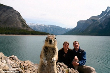 squirrel_photobomb_20091011_1197947436