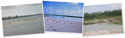 View Birds and vistas of Cayo Costa