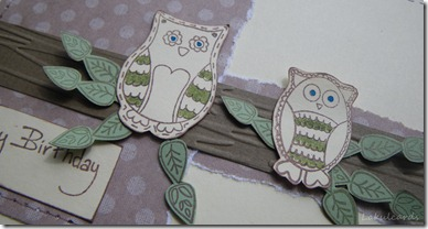 Owls Closeup