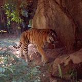 Guangzhou 2005 Zoo