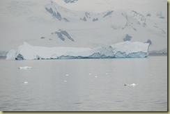 Our last iceberg