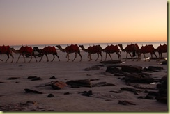 Camel Ride on Beach