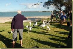 Pat the Pelican Feeder