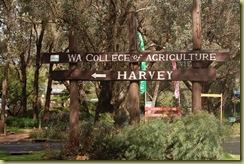 Harvey 3