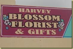 Harvey 6