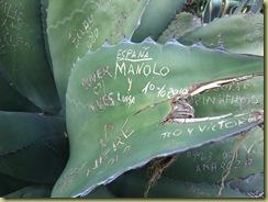 Grafiit on Plant