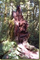Rain Forrest Rotting Trunk