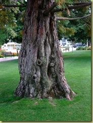 Trees Square-1