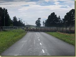 Deer Herding