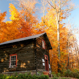 Sugar Maple Shack by Scott Glime - Landscapes Forests ( orange, fall colors, shack, trees, maple syrup )