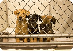 puppies-humane-society1
