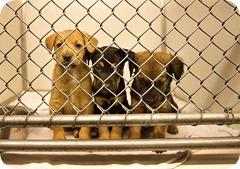 puppies-humane-society1
