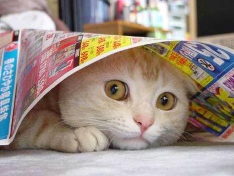 Cat 13.jpg