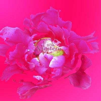 Pinkkiä pinkillä