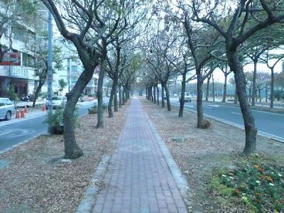 bikeway5中央安全島自行車道
