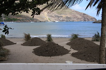 Trop de sable sur la plage : on veut de la pelouse!!!