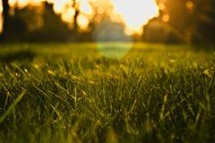 Spring-Grass-3