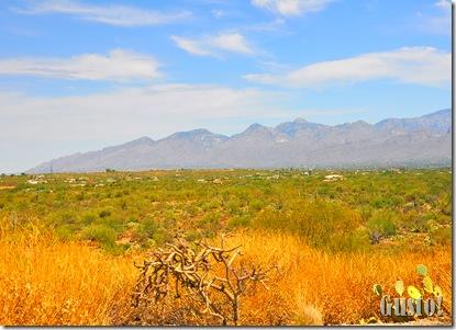 1. Saguaro NP east