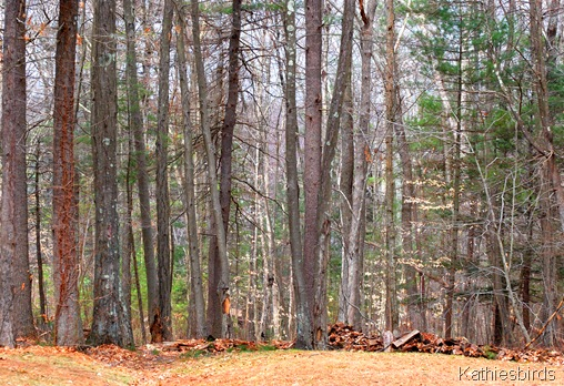 10. woods_kathiesbirds