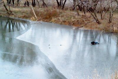 первокласник на льду