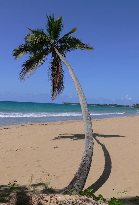 Au coeur de la République-Dominicaine P1270229