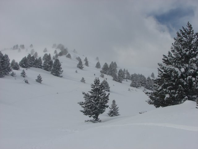 descenso entre pinos