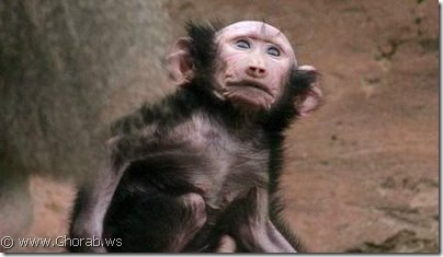 Monkey suffers from hair problems