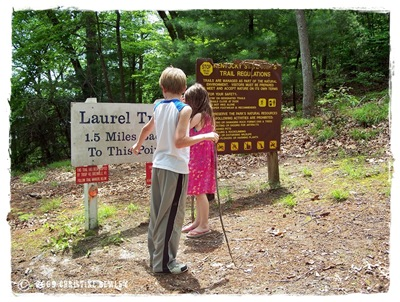 Beginning of Laurel Trail