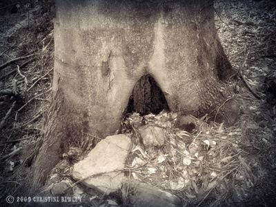A hobbits house??