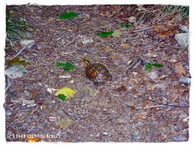 Turtle....turtle....