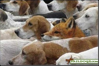 faildogs-blendingin