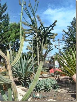 Kaktuspuisto